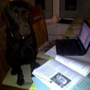 This essays hard..can i have a treat yet?
