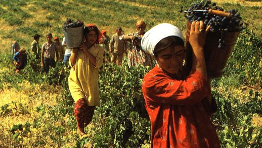 women bringing in the harvest