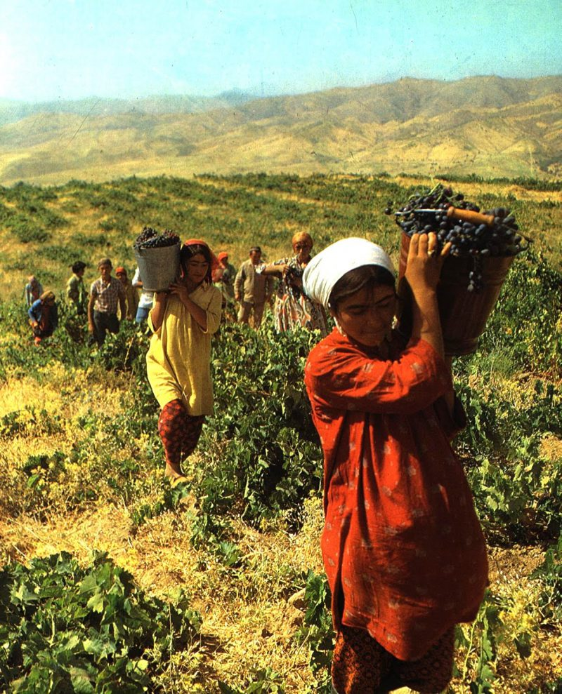 women bringing in the harvest