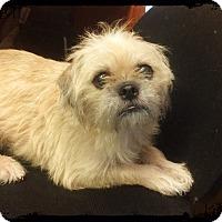 Los Alamitos Ca Border Terrier Terrier Unknown Type