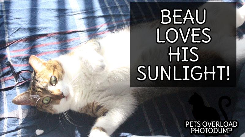 beau-loves-his-sunlight