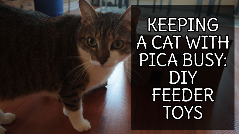 keeping-a-cat-with-pica-feeder-toy
