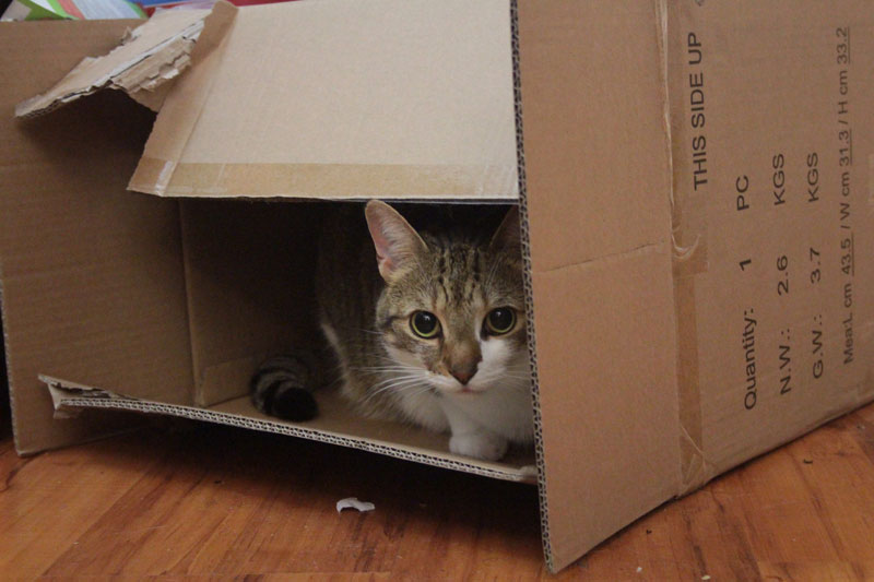 beau-sitting-in-box-adorable-cat