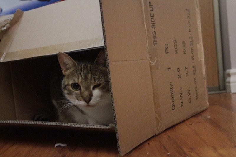 beau-sitting-in-box-winking