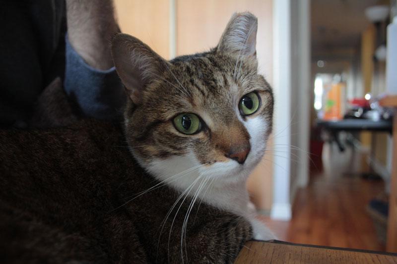 beau-sitting-on-lap