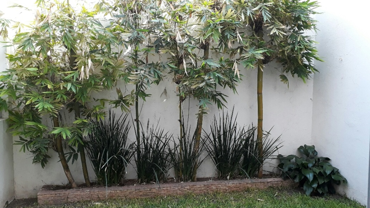 8 jardin