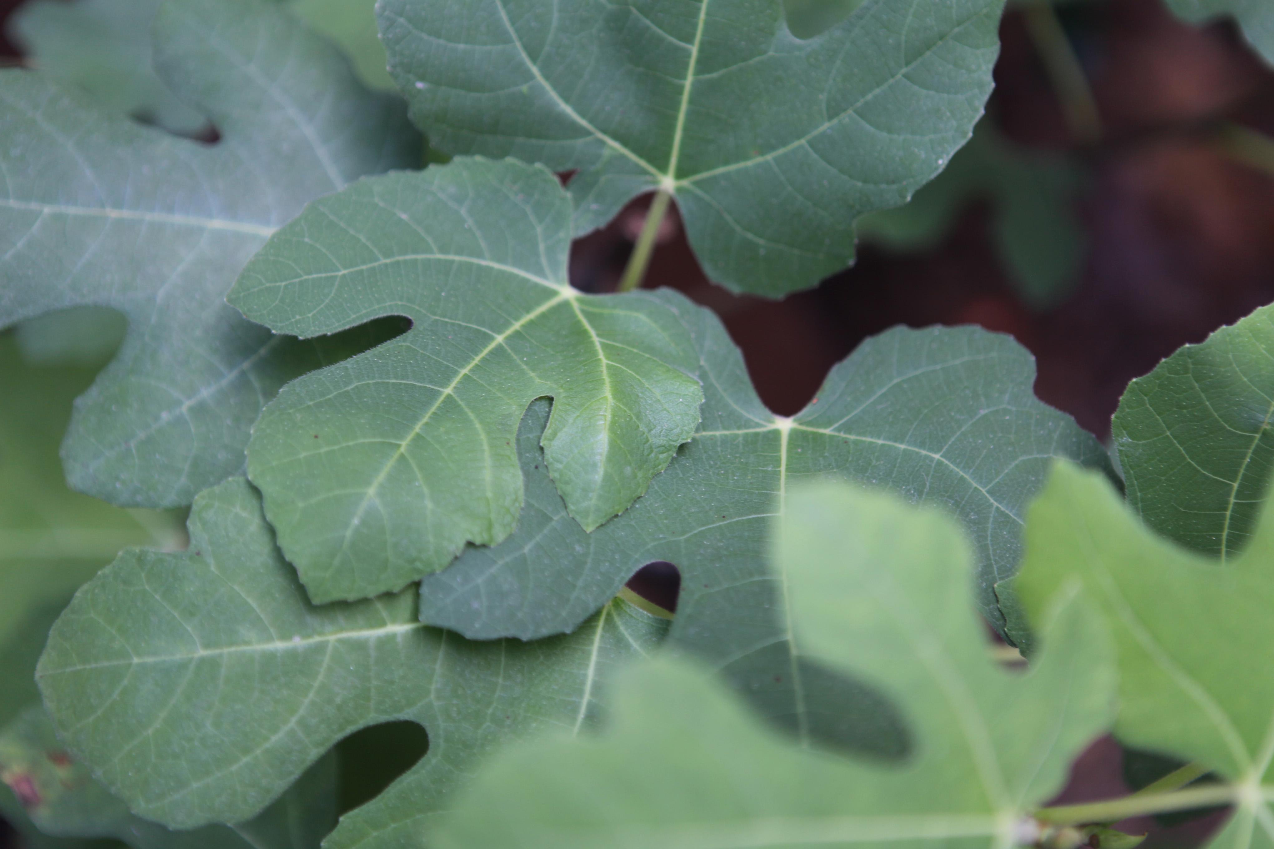 Homemade organic pesticide for fruit trees home guides sf gate - Homemade organic pesticides ...