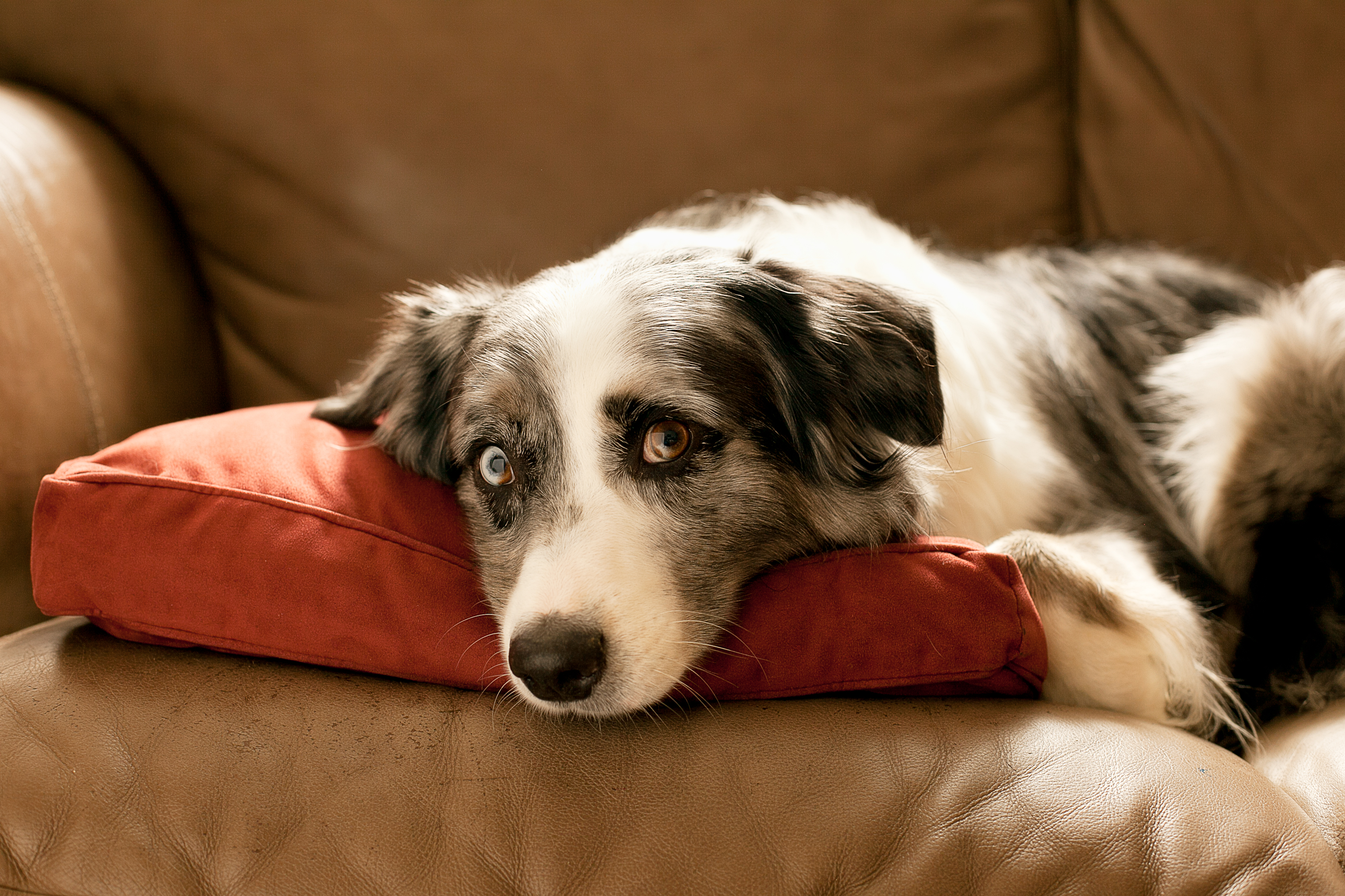 Diseases Dogs Can Give To Rodents