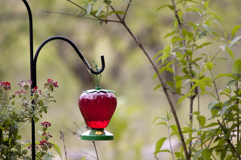 hummingbird gallon decorative feeder pdx wayfair desert outdoor steel one reviews