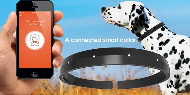Smart collar and other pet trackers have become popular of late.