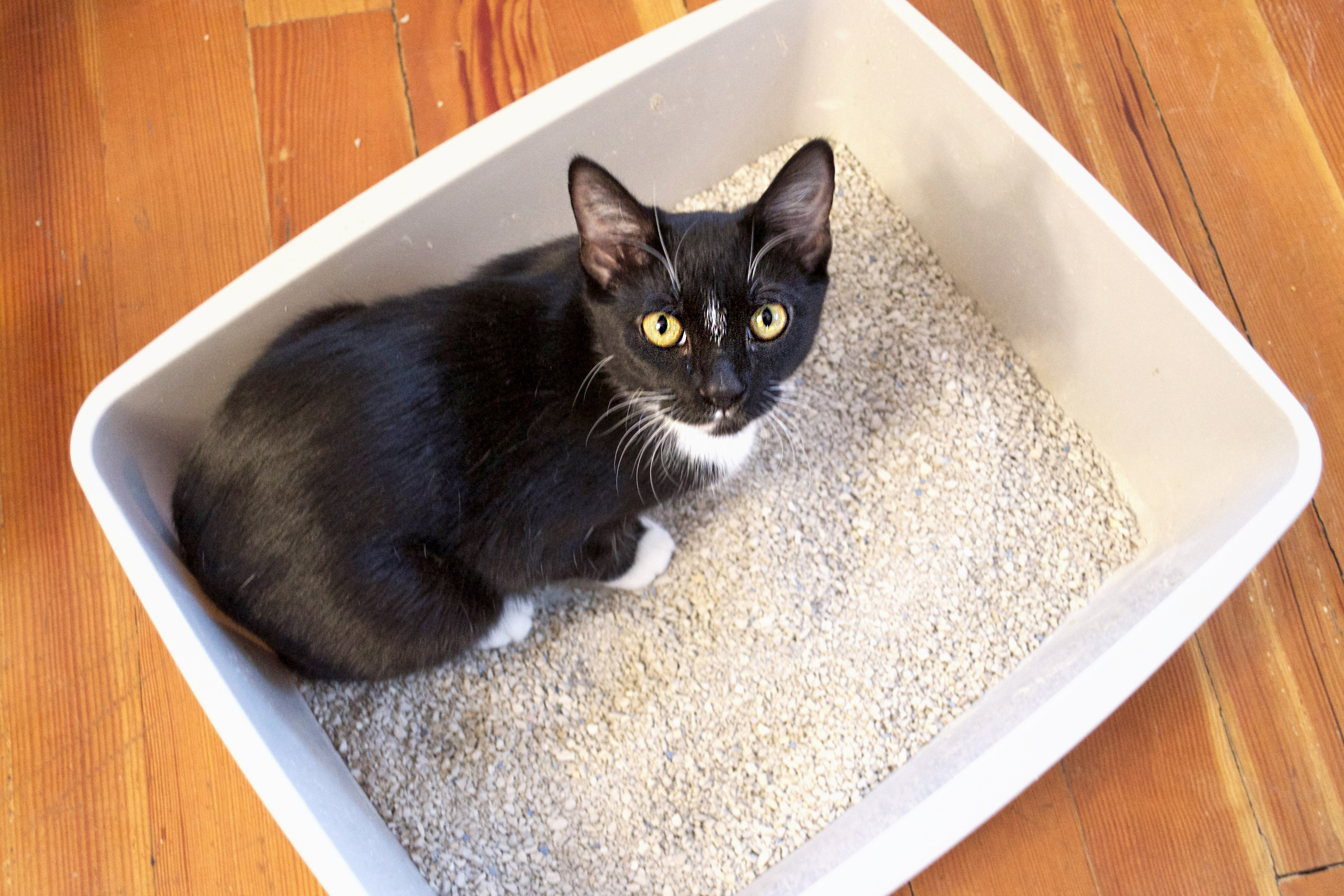 how to retrain a cat to use litter