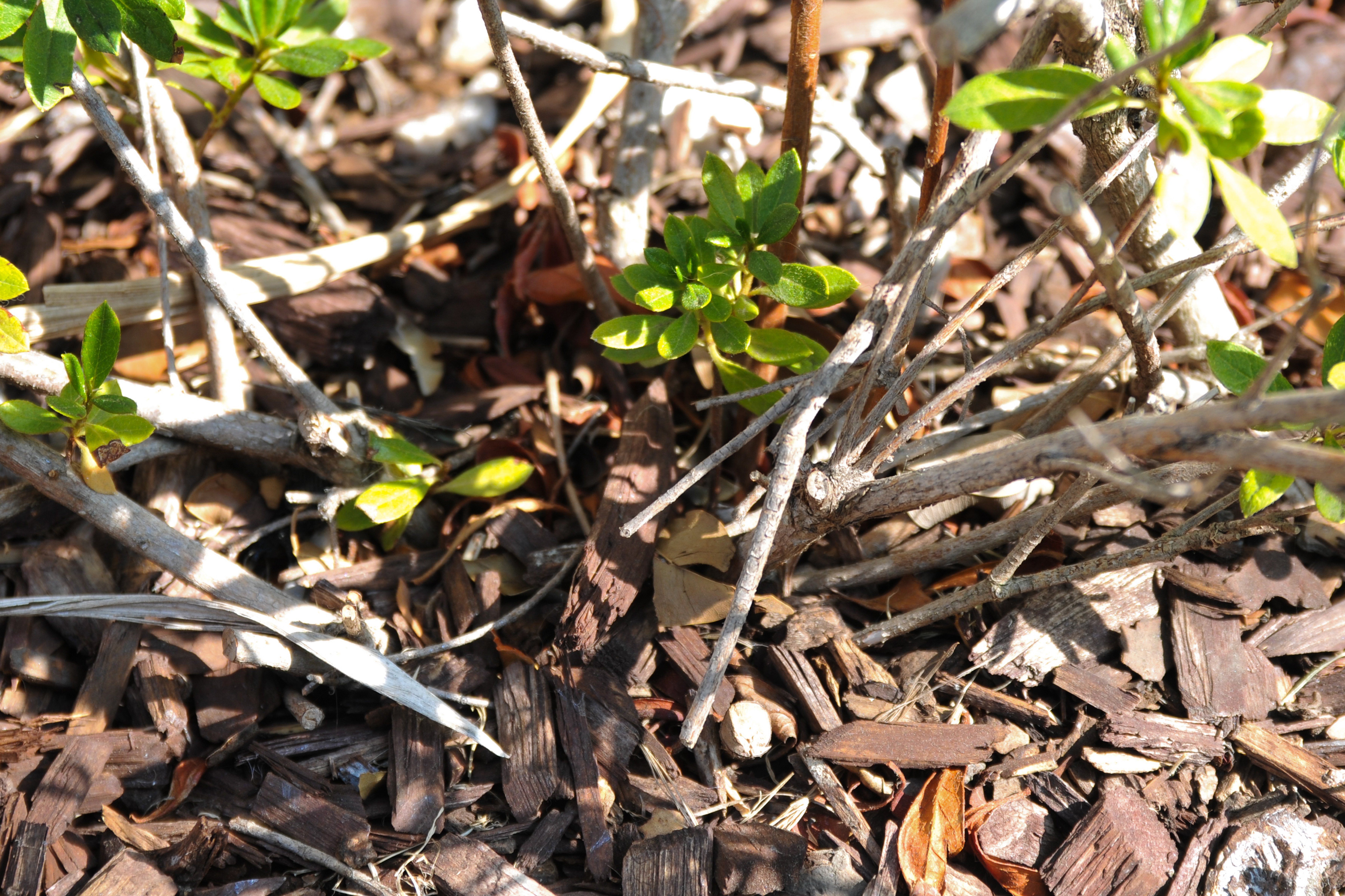 how to stop weeds from growing through mulch home guides sf gate