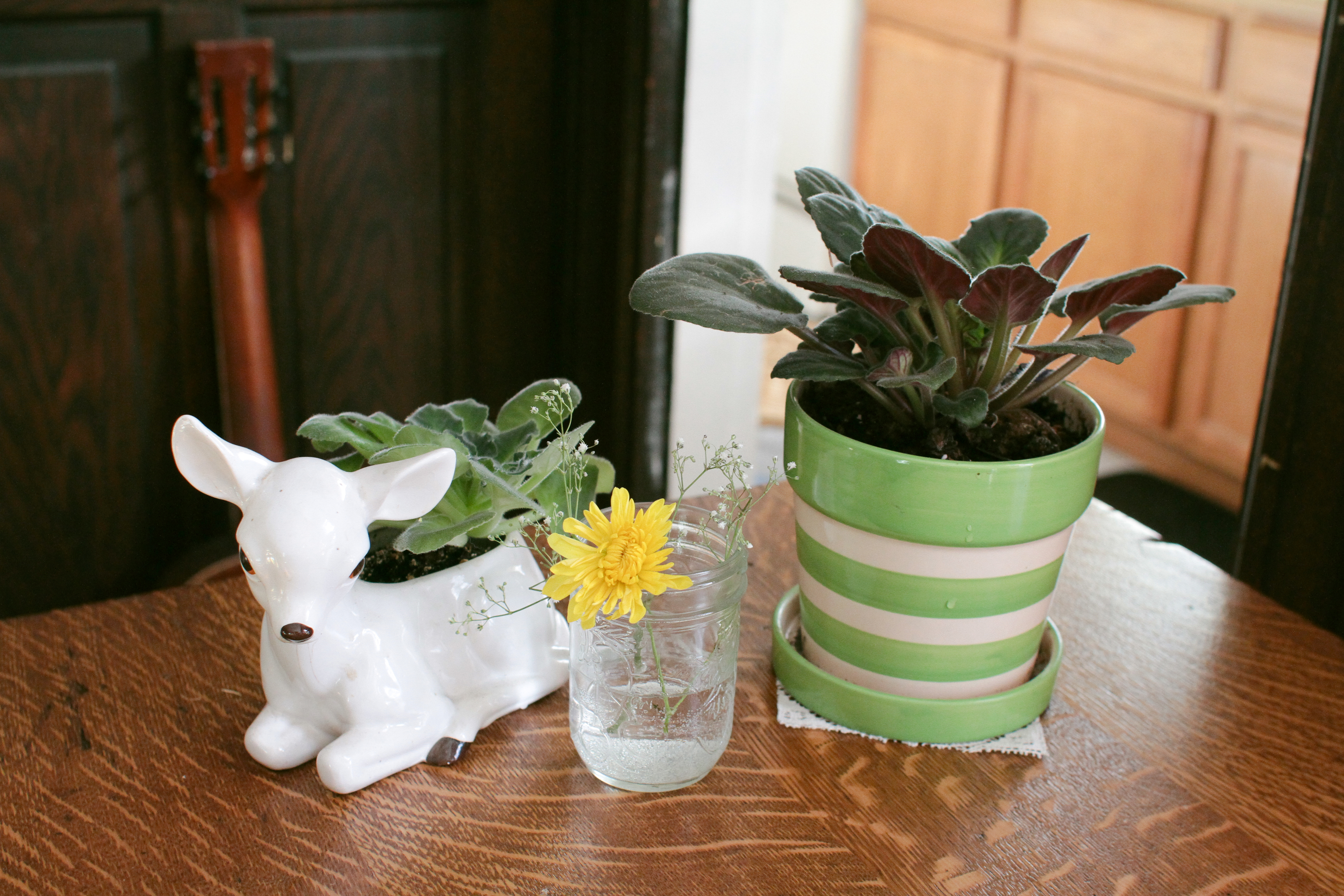 home remedies for house plants with gnats garden guides