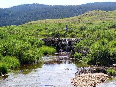 Peak Peak Buffalo Buffalo Peaks Wilderness Area