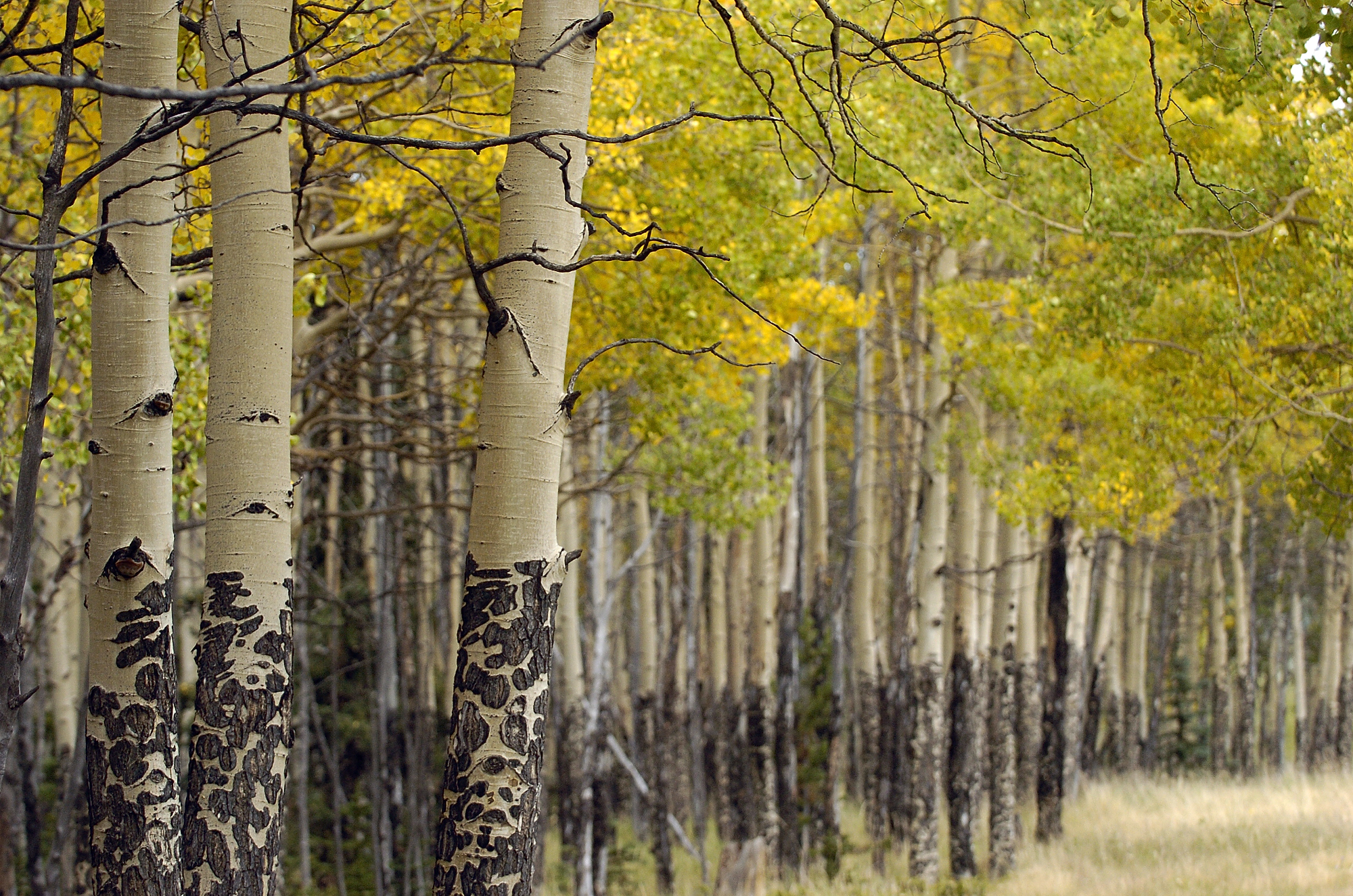 Guide: Experiencing Colorado's fall colors