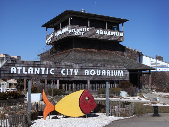 Atlantic City, Aquarium, fish, water, aqua, Gardner's Basin, attraction