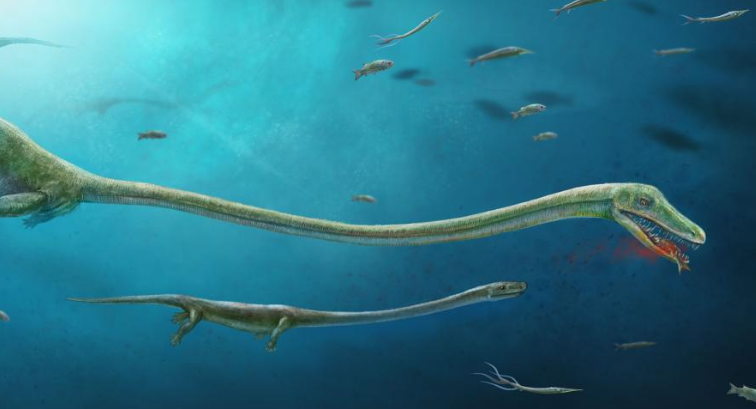 Baby 'Sea Monster' Found Inside Fossil Mother