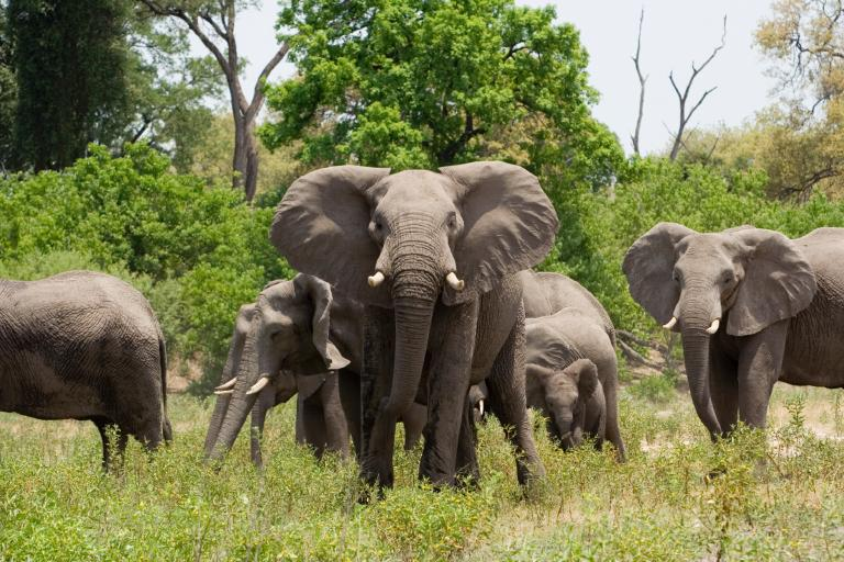 """For trade in wild elephants, Zimbabwe is """"open to doing business with the whole world,"""" said Saviour Kasukuwere, the country's minister for environment, water, and climate, in an exclusive interview with National Geographic."""