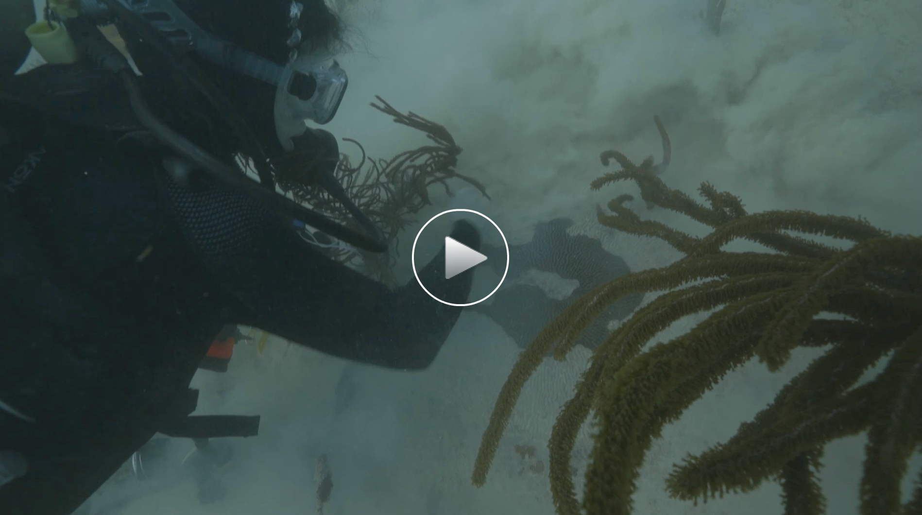 See how seaport dredging to help shipping is killing endangered coral in the waters near Miami.