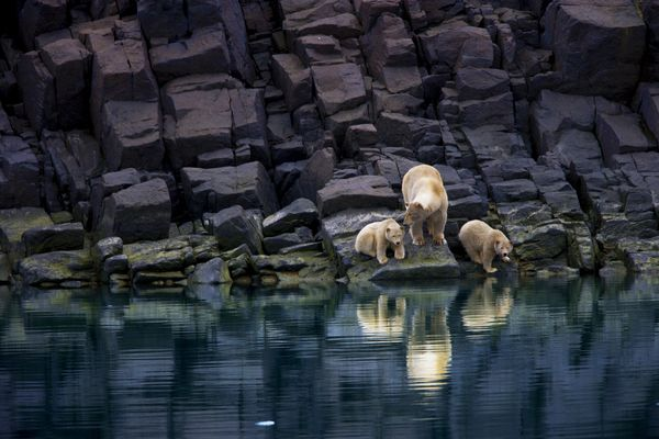Today, on International Polar Bear Day, PBI hopes to promote public awareness about the need to address the advancing detrimental effects of climate change.