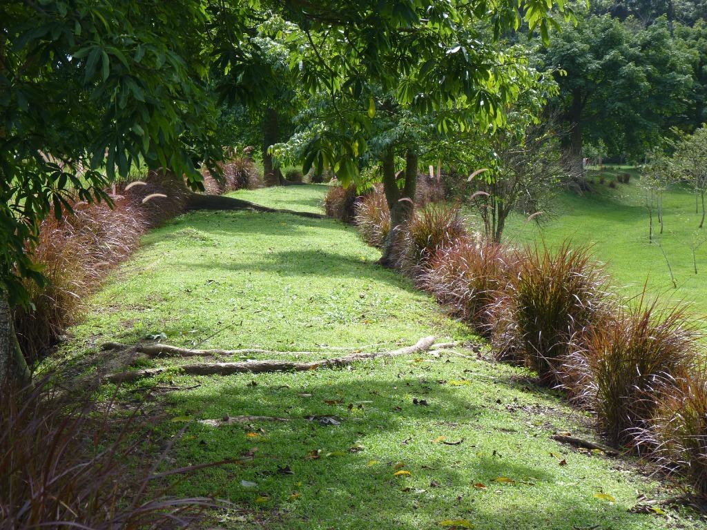 Jard n bot nico de caguas for Actividades jardin botanico caguas