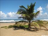 Playa Sardinera - HATILLO