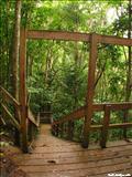 Bosque Guajataca  - ISABELA