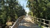 Paseo Tablado de Isabela - ISABELA