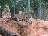 Zoológico de Puerto Rico Dr. Juan A. Rivero - MAYAGÜEZ