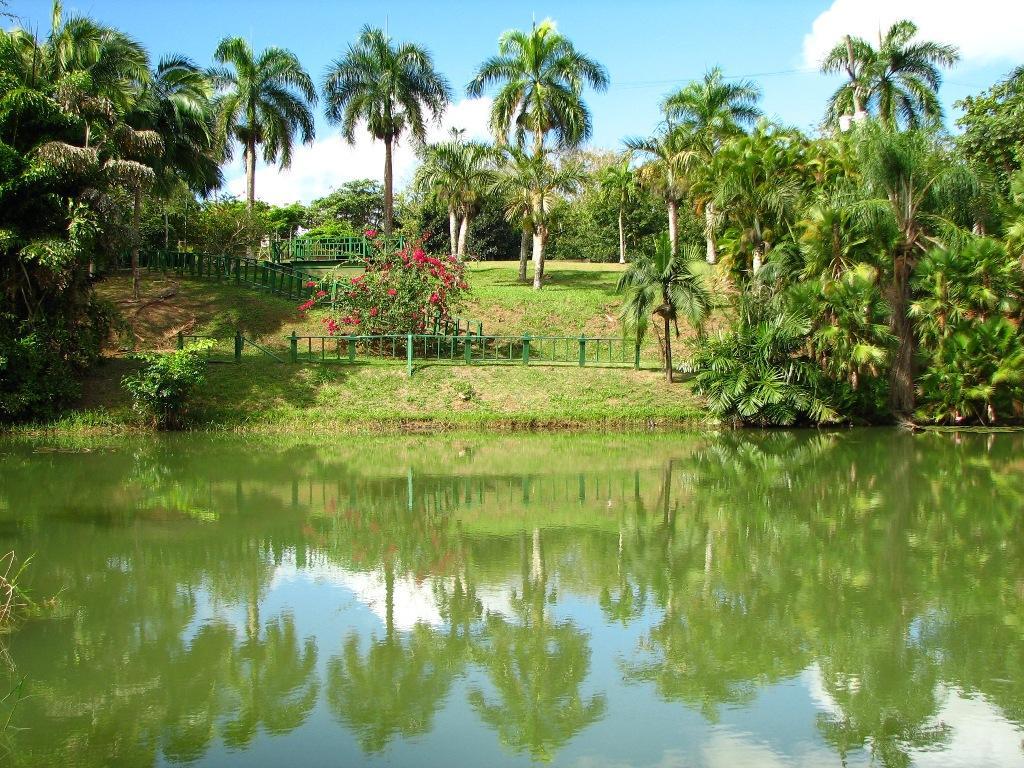 Jard n bot nico for Actividades en el jardin botanico de caguas