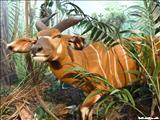 Museo de Vida Silvestre - SAN JUAN