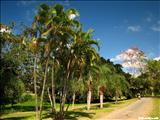 Parque Luis Muñoz Marín - SAN JUAN