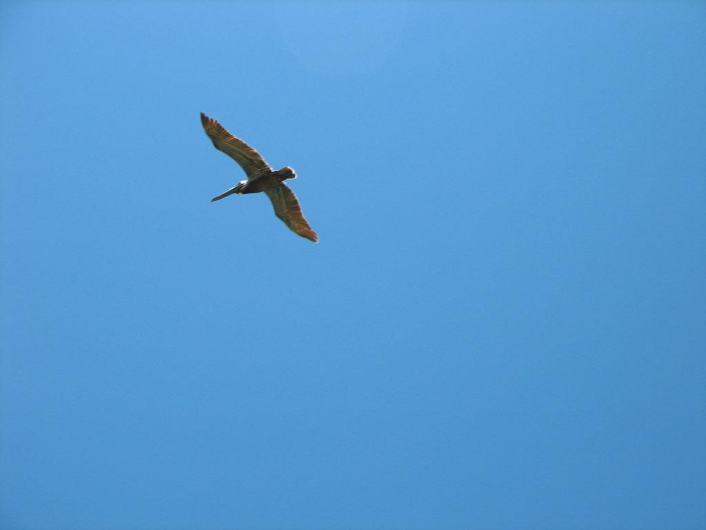 Capilla ecum nica - Volar a puerto rico ...