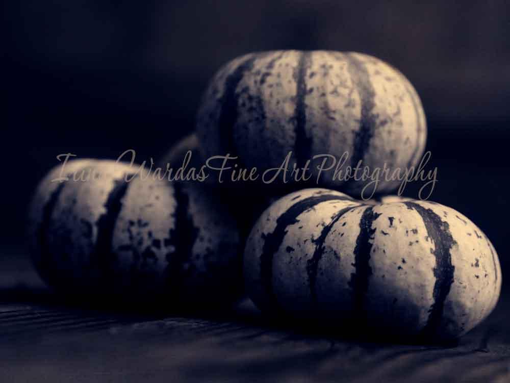 Dark Blue Pumpkin Photograph