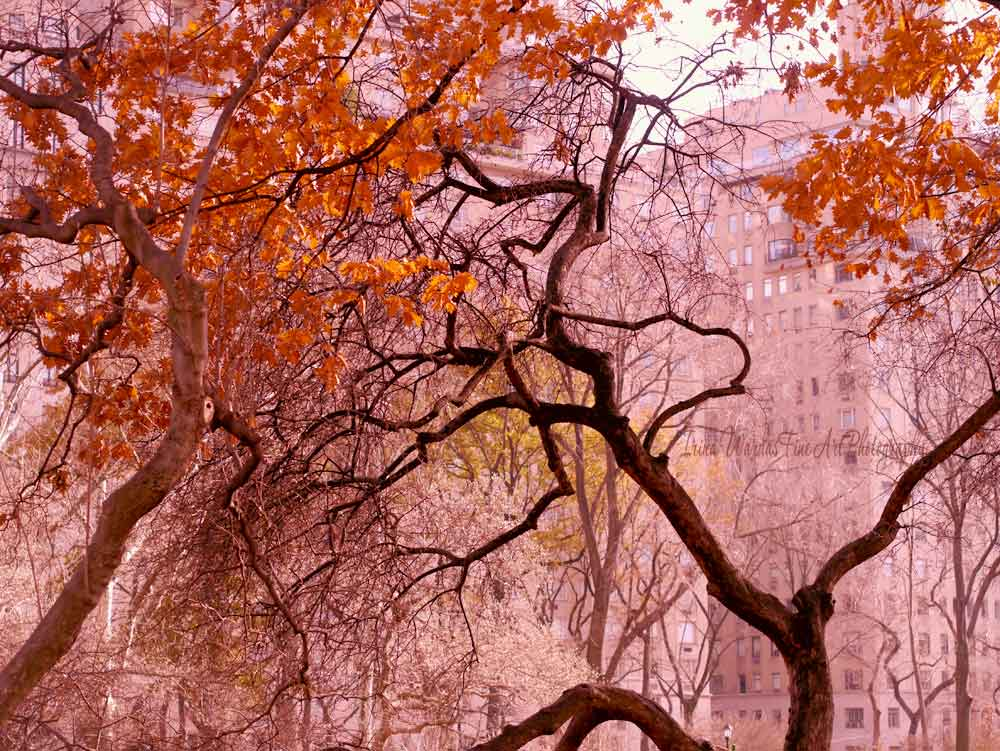 New York Central Park Autumn