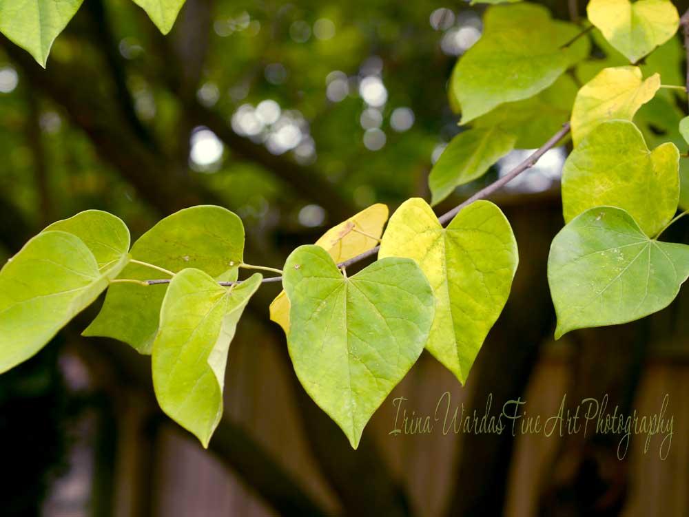 Foliage photography