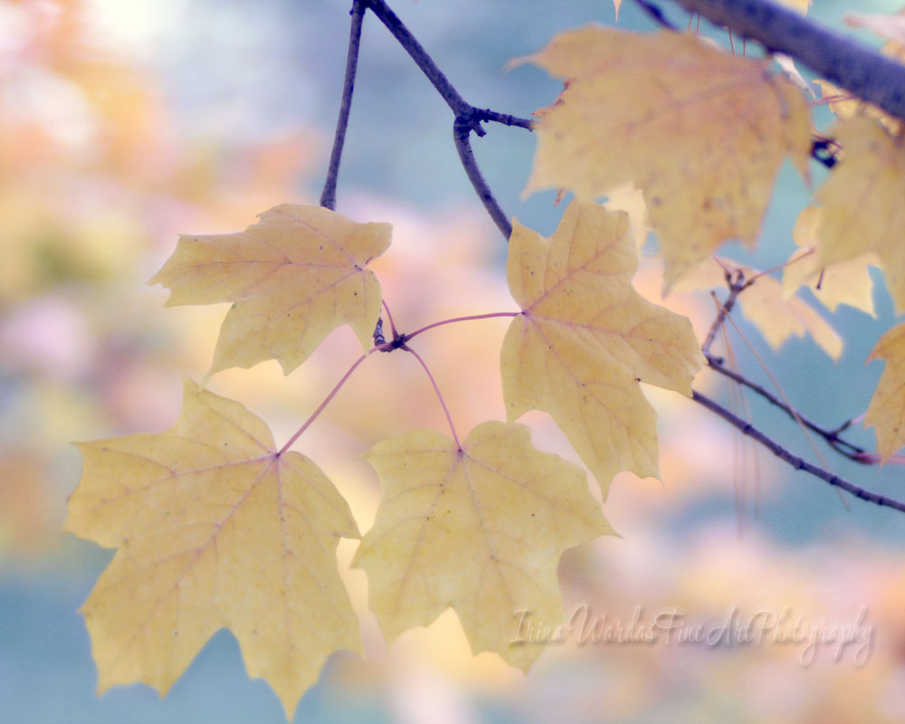 Yellow Leaves in Pastel foliage photography