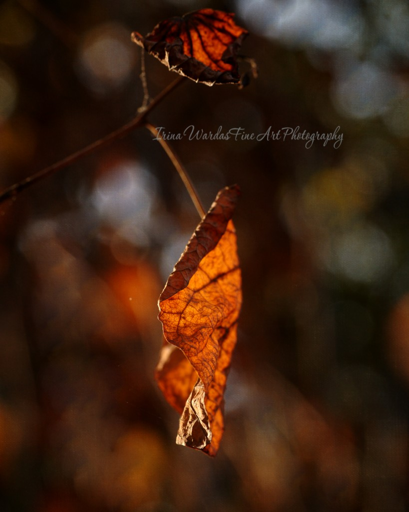 Dry Leaf in the Sunshine