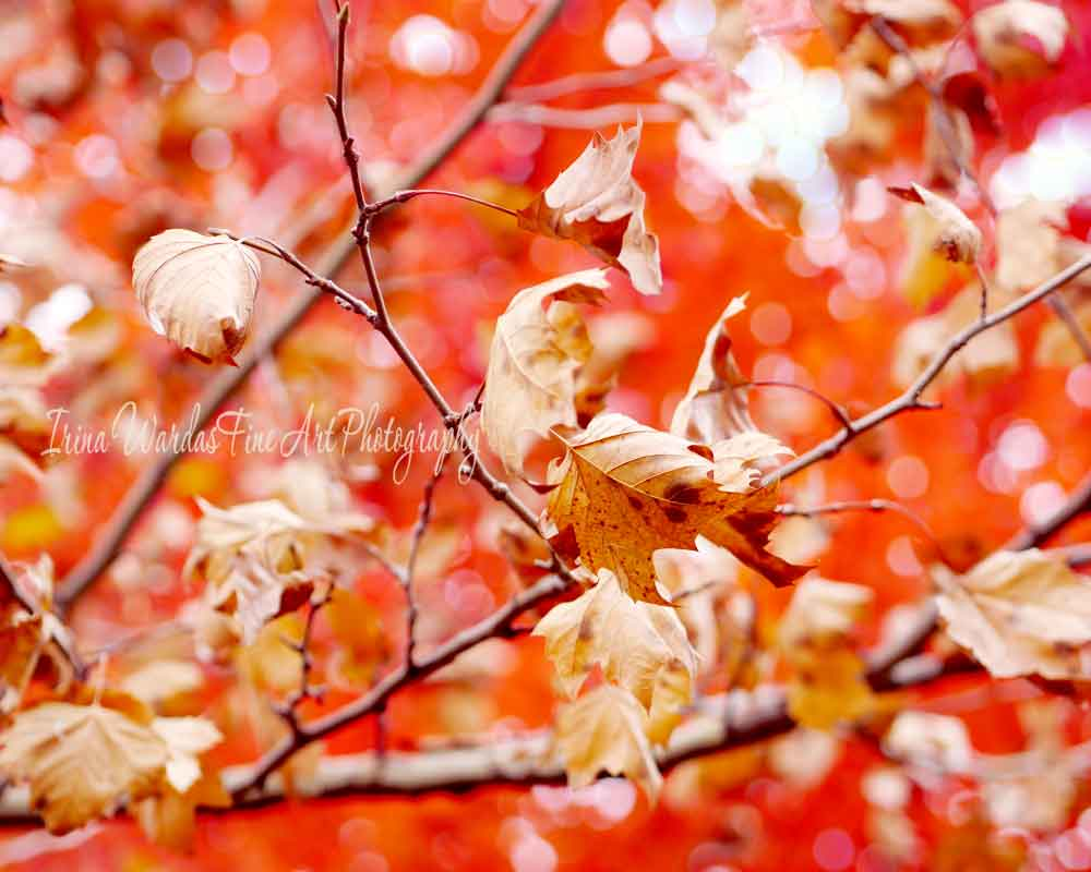 Autumn Dry Leaves