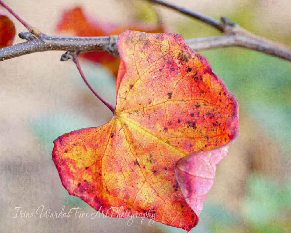 Single Autumn Leaf photo