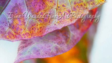 leaf abstract photography