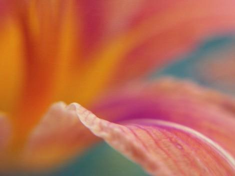 Pastel-Flower