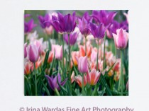 tulips-on-wall-canvas