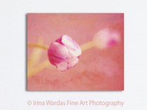 pink-tulip-canvas