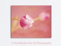 pink-tulip-canvas