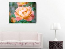 Peach-Rose-Canvas