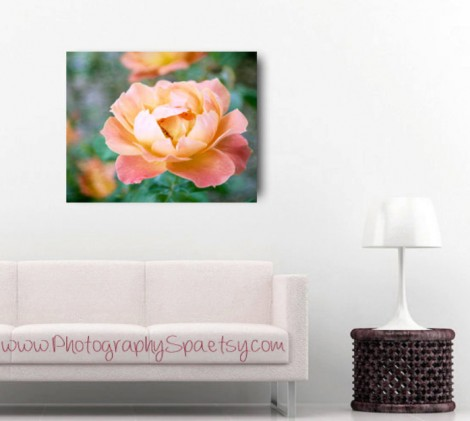Peach-Rose-Canvas
