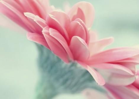 Pink Daisy Print Gift