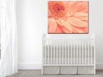 peach-wall-daisy-wall-canvas