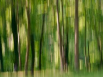 abstract-photograph-of-trees